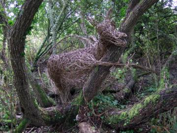 Photograp of a willow gragon in a wood